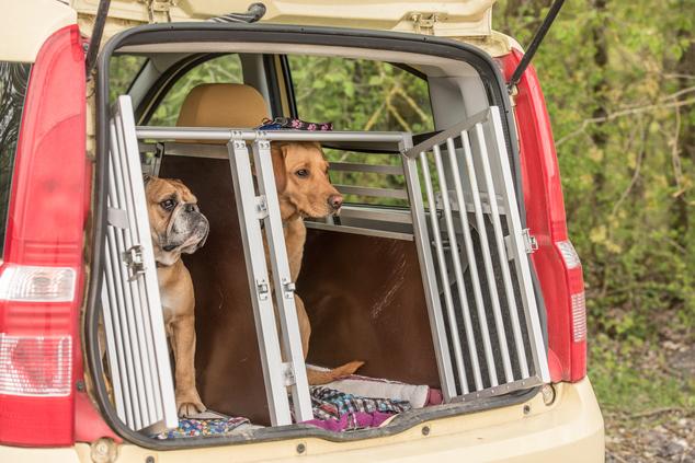 Hundetransportbox Kofferraum