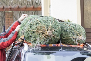 Weihnachtsbaum auf dem Autodach