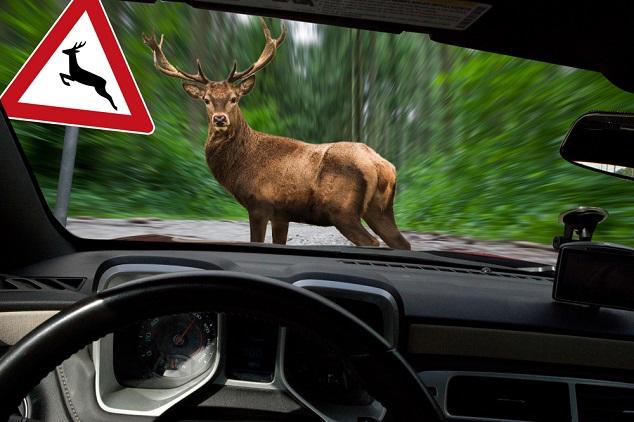 Auto kollidiert mit einem Hirsch